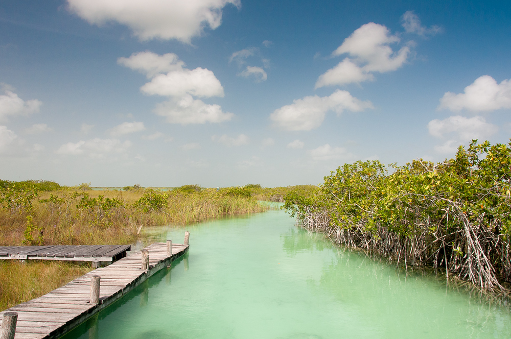 A Wooden Dock in Rivera Maya, Mexico