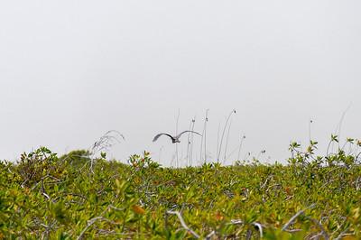 Bird on flight in Mayan Riviera, Mexico