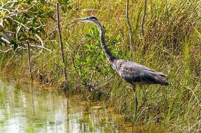 Wildlife in Mayan Riviera, Mexico