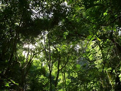 Wald: Huitepec