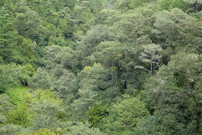 Wald: Arcotete