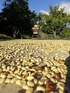 Kaffee trocknen