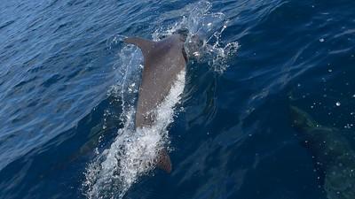 ... und nochmals ein Delfin