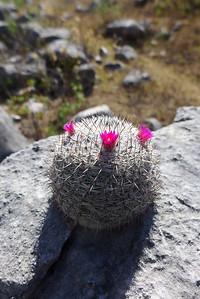 Sierra Mixteca: Grosse und kleine Kakteen