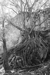 Baum entlang einer Schlucht bei Santiago Apoala