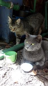 Misty y Máx