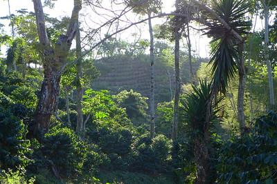 Finca Peru Paris: Wald und neue Kaffeplantagen