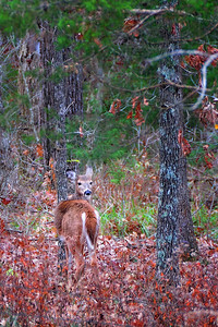 """The only deer I """"shot"""" this year!"""
