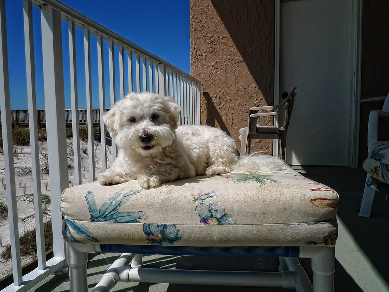 Lord Spencer on his royal sunning cushion. March 29, 2009