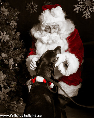 Have you been a good boy? Pet Value Photo with Santa