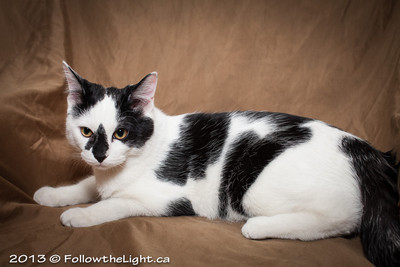 Minou is up for adoption. Visit the website for mor info: http://www.catrescuenetwork.org/