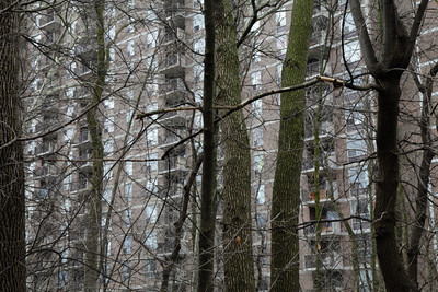 April 11 / City in the forest