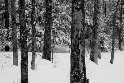 February 28 / Mid Winter Beauty