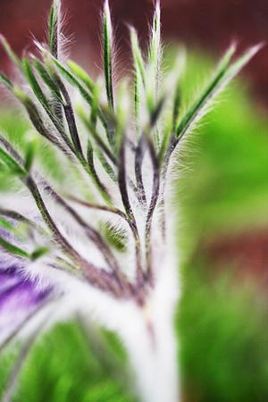 5-4 / Les couleurs du printemps