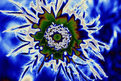 5-5 / Fleur digitale