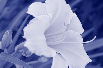 6-14 / Une fleur au hazard