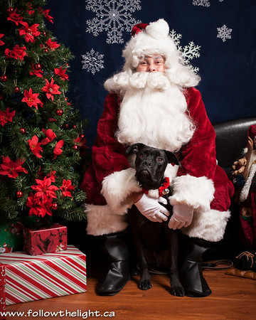 Pet Value Photo with Santa