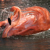 Flamingo Wash