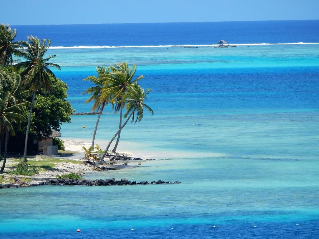 Palm Trees, Bora Bora