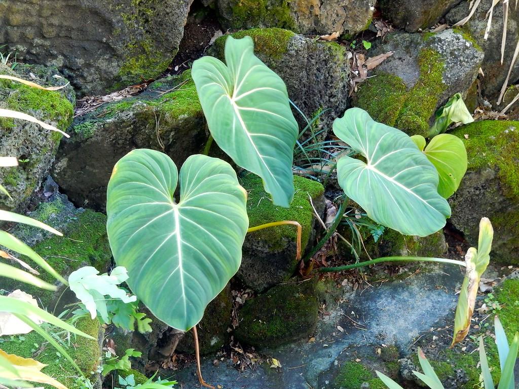 Honolulu Vegetation