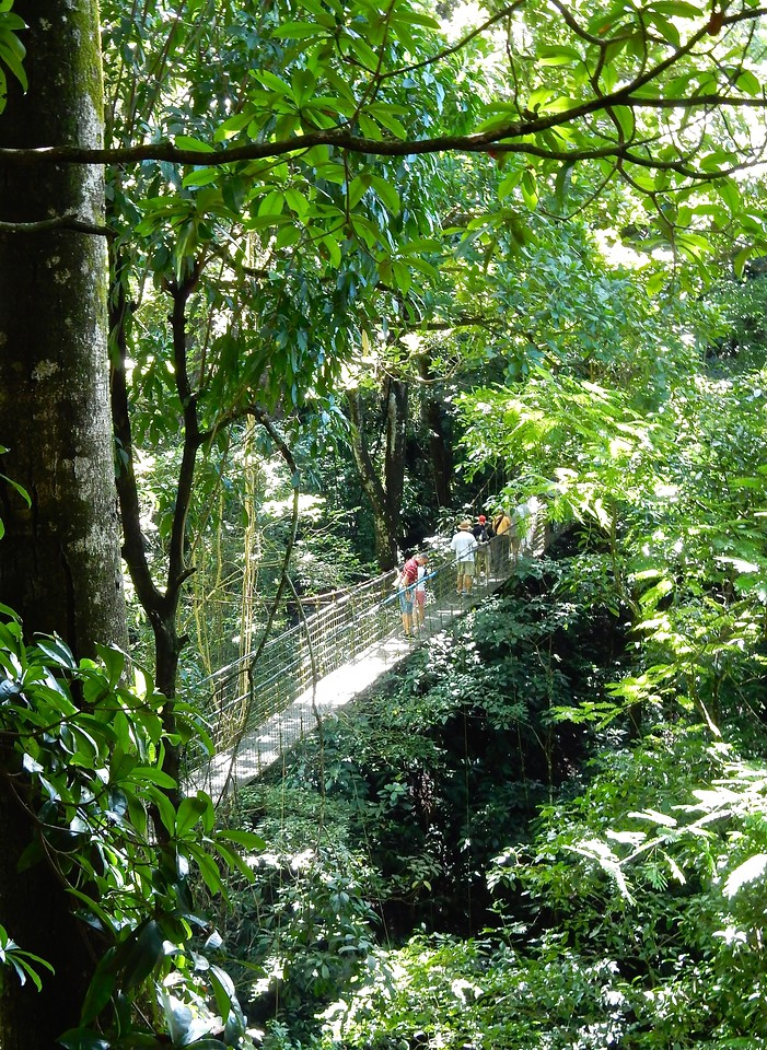 Treetop Bridge, Costa Rican Rain Forest