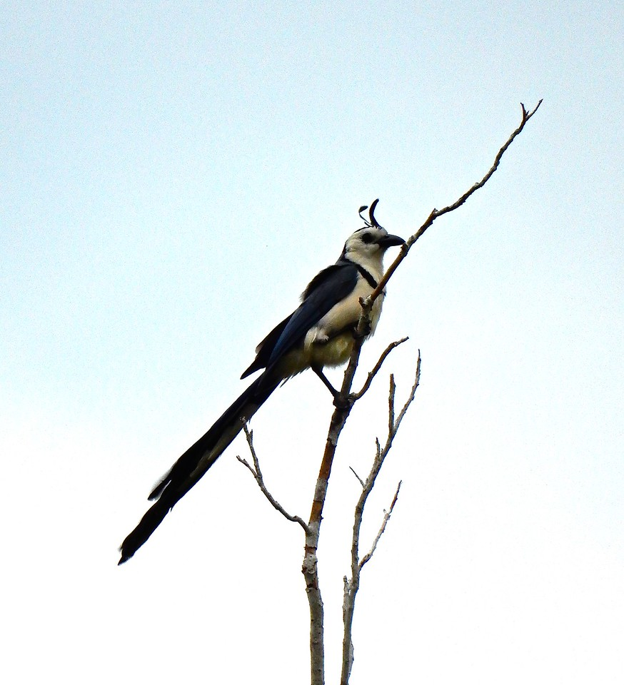 Bird, Huatulco, Mexico