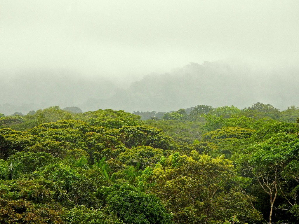 Panama Canal Zone Jungle