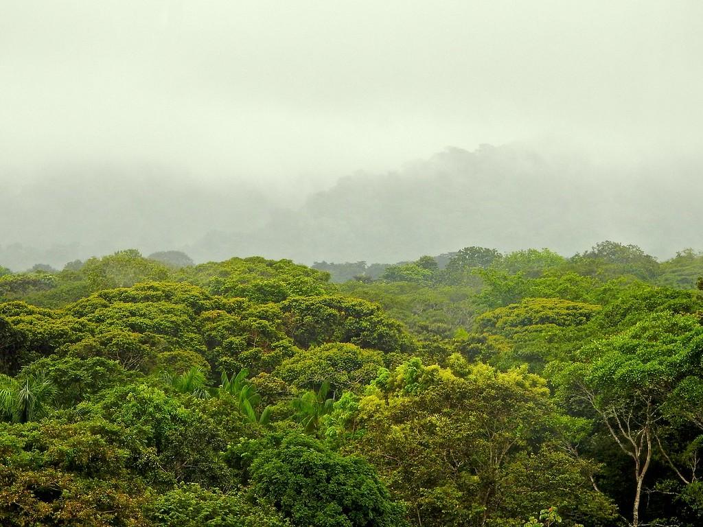 Panama Canal Zone Jungle
