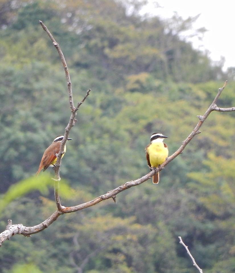 Huatulco, Mexico Tropical Birds