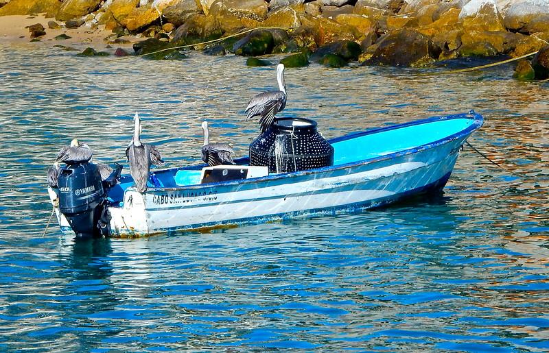 Cabo Pelicans