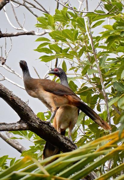 Huatulco, Mexico Birds