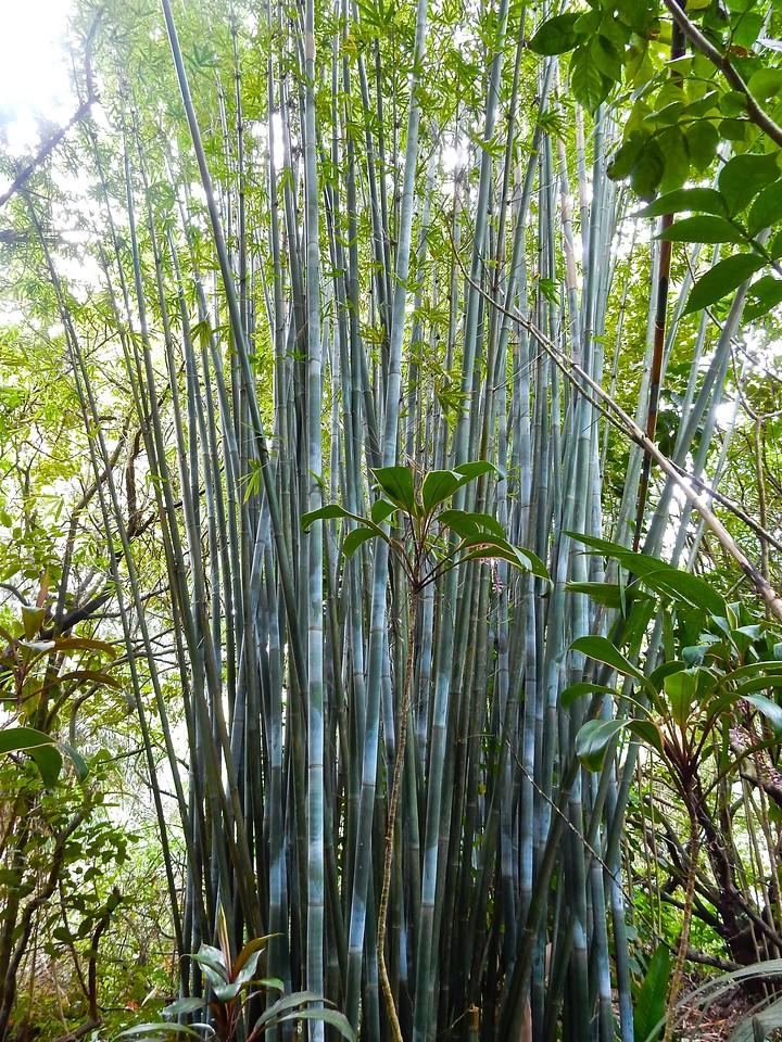 Bamboo, Maui, Hawaii
