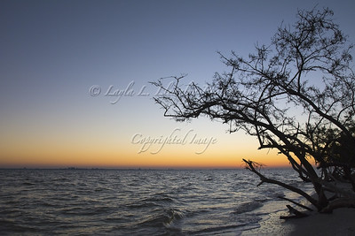 Daybreak in Sanibel