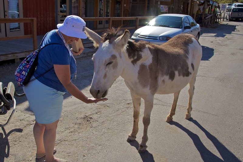 Day 12: Joy bought a bag of burro feed and instantly became the most popular person in our party.