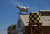 Day 13: There are a couple of cows on roofs along Route 66.  This one is just outside Victorville, CA.