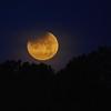 Moon 1_31  008