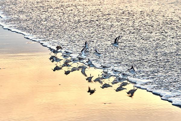 Sea Birds, Higgins Beach, Maine
