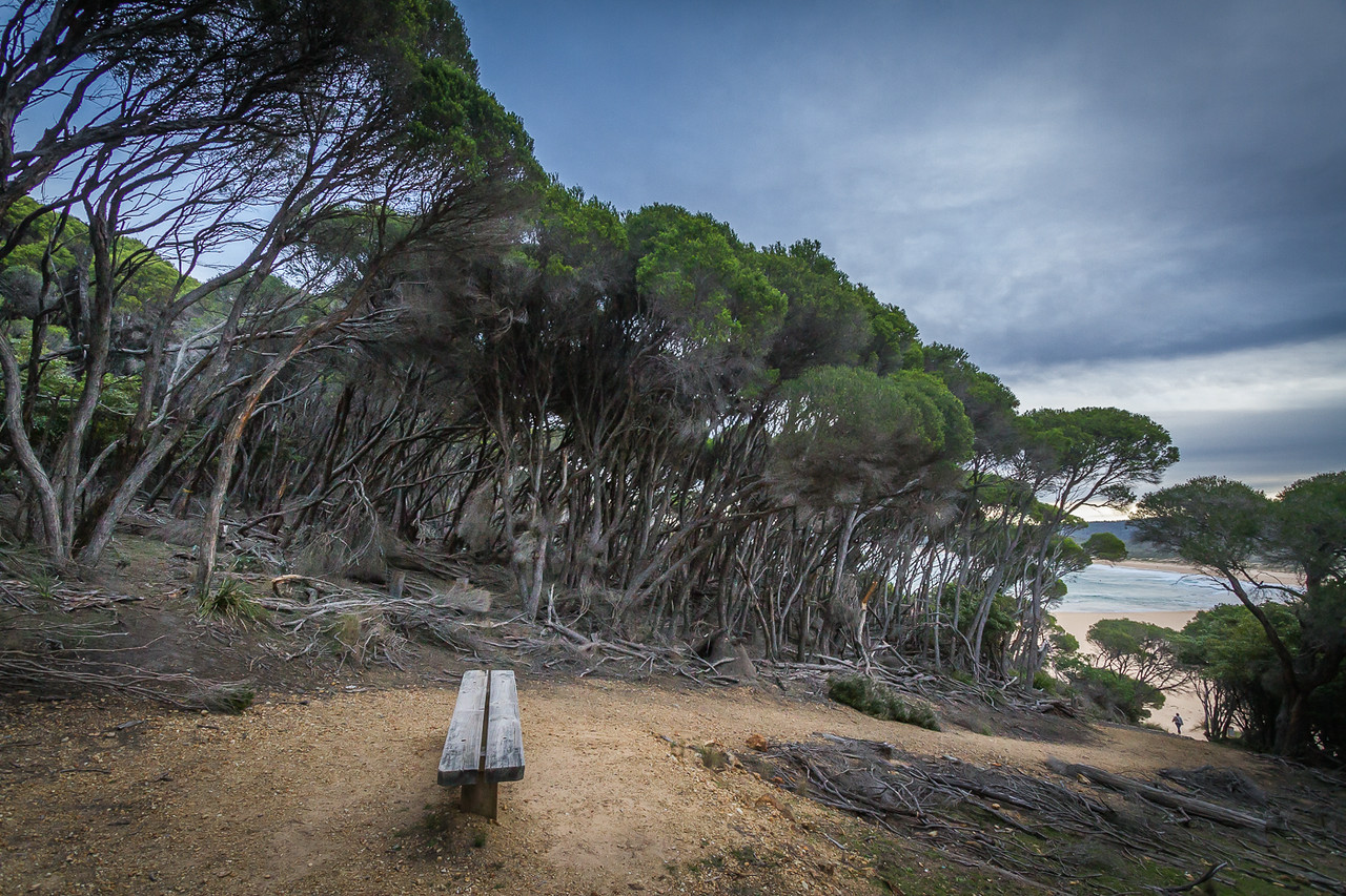 Hundreds of T trees (Melaleucas) line the route through the National Park to the beach.