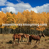 Horses in the fall colors