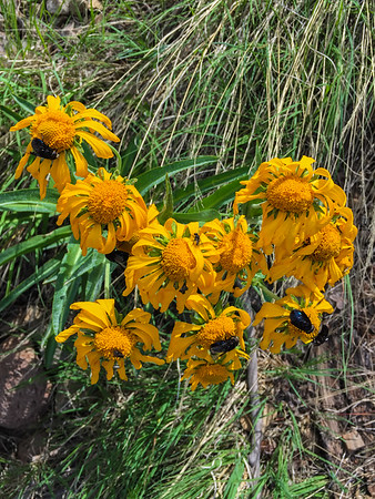 4th of July, 2016, Flagstaff/Lockett Meadow