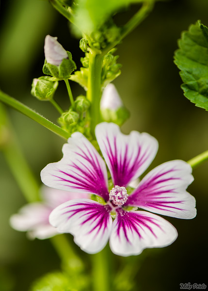 Flower in the Yard