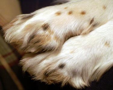 November 30 puppy paws