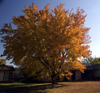 November 20 fall
