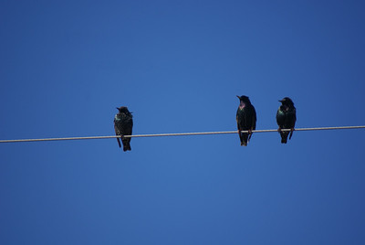 December 20 bird on a wire