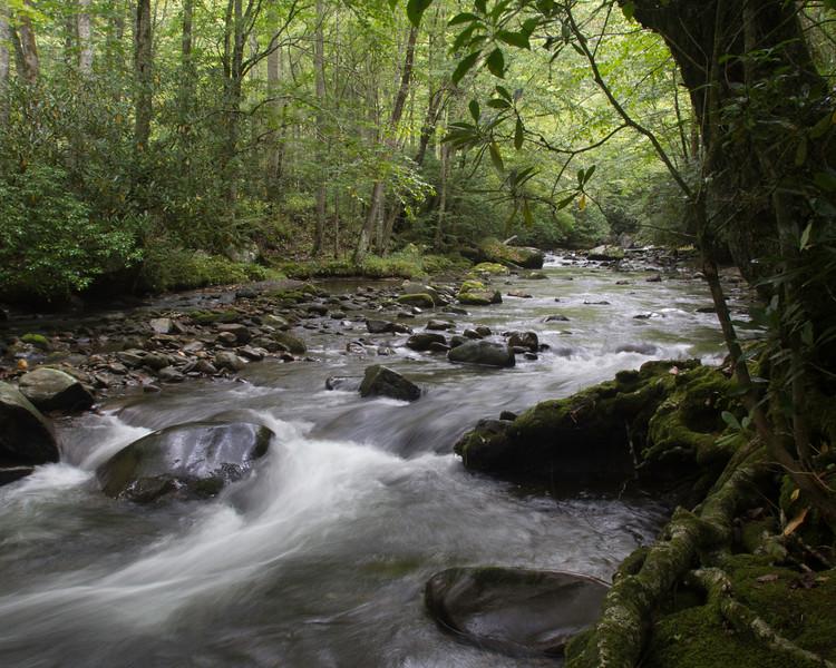 Bradley Fork