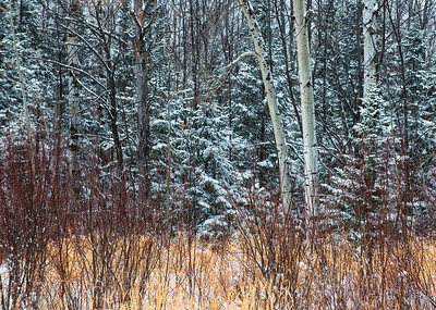 Winter scene from the Upper Peninsula of Michigan.