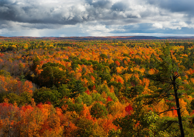 Fall on the Manistee