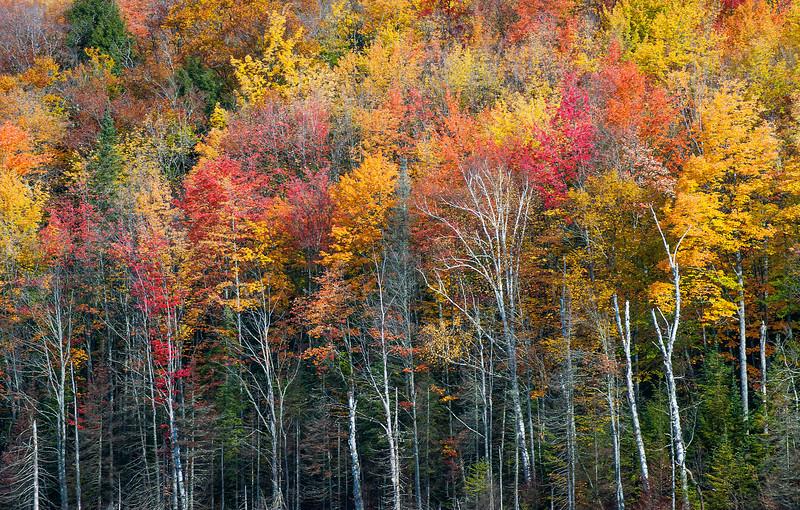 Fall at Red Jack Lake