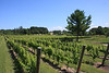 Mission Hills on Old Mission Peninsula in Traverse City Michigan - Mission Hills Vineyard