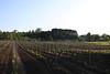 Mission Hills on Old Mission Peninsula in Traverse City Michigan - Mission Hills Vineyard